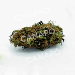 infiorescenze canapa light candy