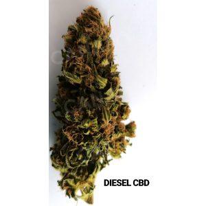 diesel cbd cannabis light