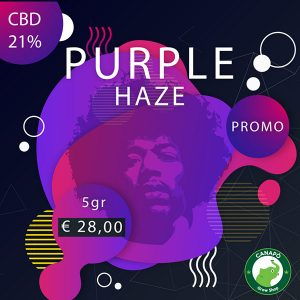 purple haze cannabis light