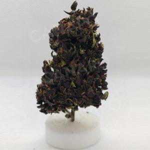 canapa legale online purpleilla