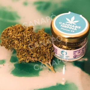 dioica 88 infiorescenze cbd cannabis light