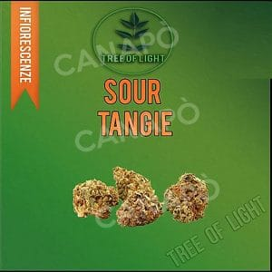 sour tangie cannabis light