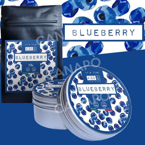 blueberry cbd