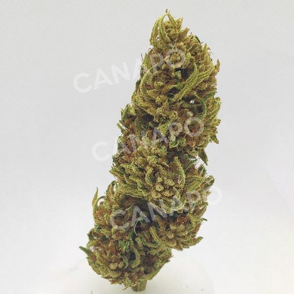 hazelnut haze cannabis light