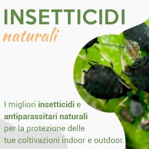 insetticidi naturali antiparassitari