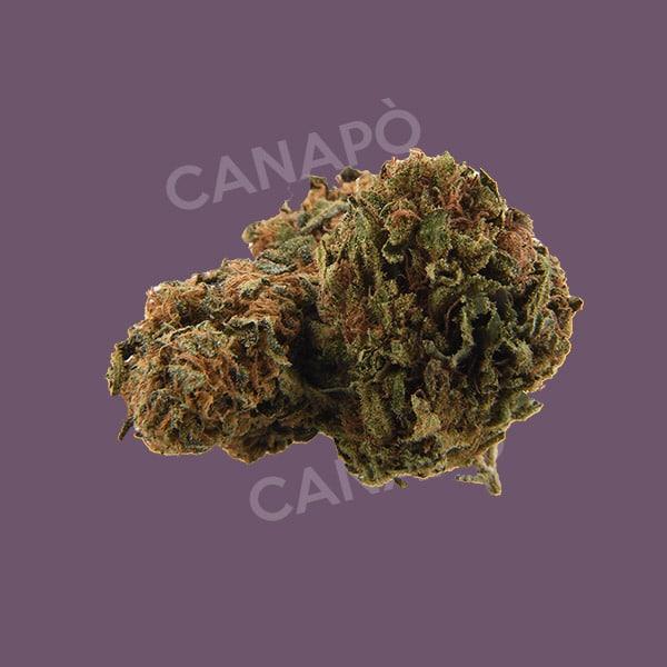 mystic cannabis light