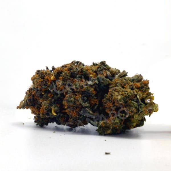 royal cheese cannabis light