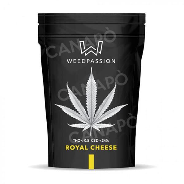 royal cjheese weedpassion