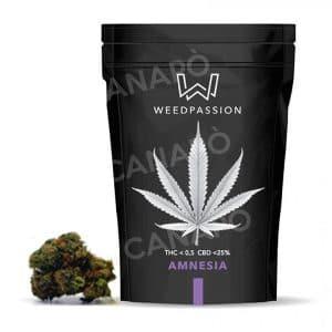 amnesia weedpassion