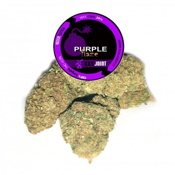 purple haze canapa legale
