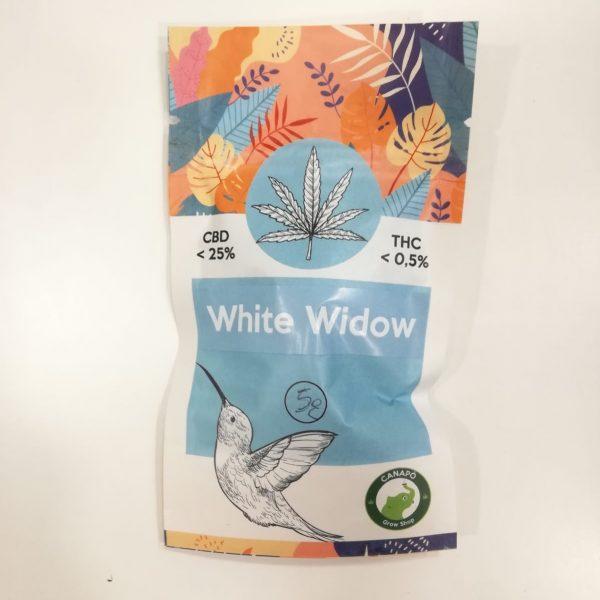 white widow cbd infiorescenze