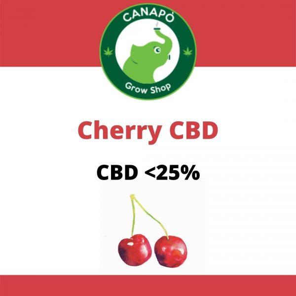 cherry cbd cannabis light legale
