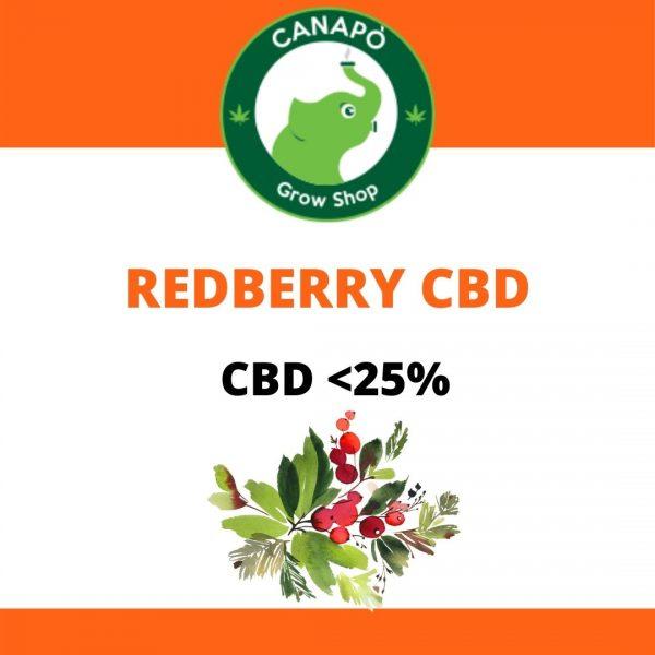 redberry cbd