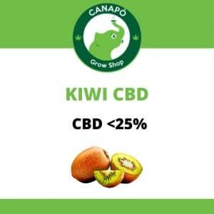 kiwi cbd cannabis light